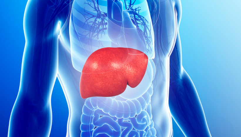 Belly Fat, Liver, and Thyroid Explained